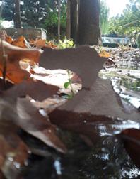 پاییز 2.png